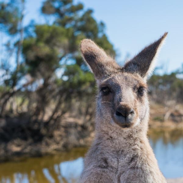 Estudiar en el extranjero en Australia